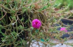 Blommar den rosa naturen för blommor härligt Royaltyfri Fotografi