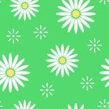 Blommar den sömlösa modellen för den gröna våren med ljus kamomill vektor Vektor Illustrationer