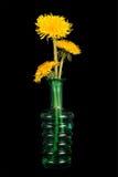 blommar den svarta maskrosen för bakgrund vasen Royaltyfri Bild
