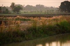 blommar den wild floden arkivfoton