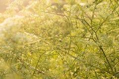 blommar den wild solnedgången Arkivfoto