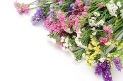 blommar det wavy lavendelleafhavet royaltyfri foto