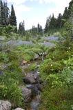 blommar det wild berg Arkivfoton