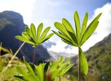 blommar det wild berg Fotografering för Bildbyråer