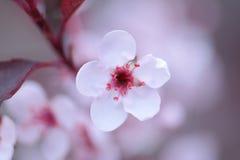 Blommar enkelt Arkivfoton