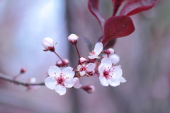 Blommar enkelt Royaltyfri Fotografi