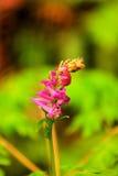 Blommar enkelt Fotografering för Bildbyråer