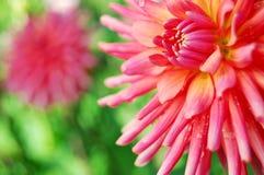 blommar färgrikt arkivfoton