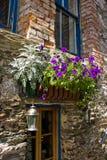 blommar fönster arkivbilder