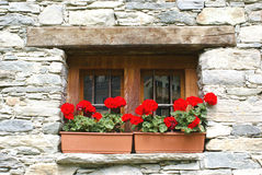 blommar fönstret Royaltyfri Foto