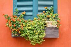 blommar fönstret Royaltyfria Foton