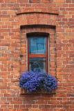 blommar fönstret Arkivfoton