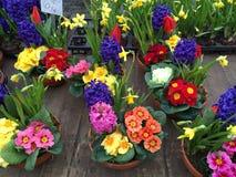 blommar försäljning Arkivfoton
