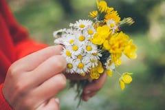 blommar flickaholdingen Bukett av blommor Vårbakgrund Bukett av tusenskönor Makrosikt av härliga vita tusenskönor Arkivbilder