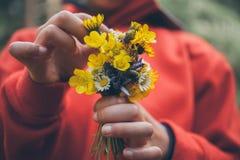 blommar flickaholdingen Bukett av blommor Vårbakgrund Bukett av tusenskönor Makrosikt av härliga vita tusenskönor Arkivfoton