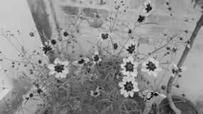 Blommar fotoet Fotografering för Bildbyråer