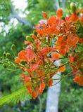 blommar fröskidor Arkivbilder