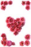 blommar fractalramillustrationen Royaltyfri Fotografi