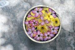 blommar frangipanien fotografering för bildbyråer