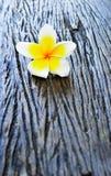 blommar frangipanien på trä Arkivfoto