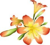 blommar freesia Arkivfoton