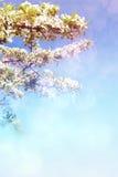 blommar fruktträdet Royaltyfri Foto