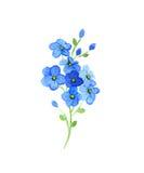Blommar glömma-mig Royaltyfri Foto
