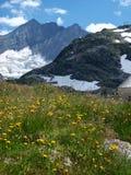 blommar glaciären nära yellow Royaltyfri Bild