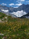 blommar glaciären nära yellow Arkivfoton