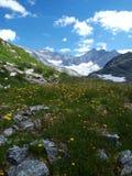 blommar glaciären nära yellow Royaltyfri Foto