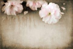 blommar grungy Fotografering för Bildbyråer