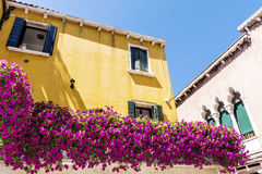 Blommar gul byggnad för antikviteten med terrassen med den rosa blommande petunian i Venezia royaltyfria foton