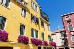 Blommar gul byggnad för antikviteten med terrassen med den rosa blommande petunian i Venezia royaltyfri fotografi