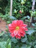 Blommar härligt Arkivfoto