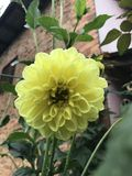 Blommar härligt Arkivbild