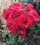 Blommar härligt Royaltyfri Fotografi