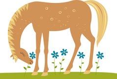 blommar hästen Arkivfoton