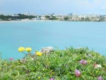 blommar havet Fotografering för Bildbyråer