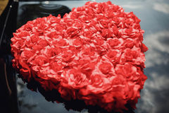blommar hjärta över rosewhite valentin Förälskelse Royaltyfria Bilder