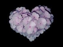 blommar hjärta Arkivbild