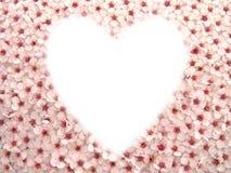 blommar hjärta mig plommonet Arkivfoto