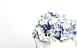 blommar hortensia arkivfoto