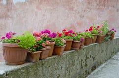 blommar italienare Arkivbild
