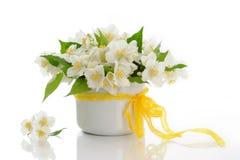 blommar jasminen Arkivbilder