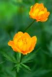 blommar jordklotet Royaltyfria Bilder