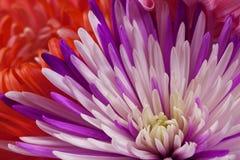 Blommar konstcloseupen. Gifta sig feriekort Arkivfoton