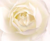 Blommar konstcloseupen. Gifta sig feriekort Arkivfoto