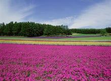 blommar kornskyen något synligt wild Fotografering för Bildbyråer