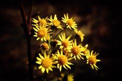 Blommar löst arkivfoto