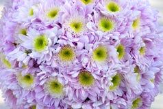 blommar lilan Royaltyfri Bild